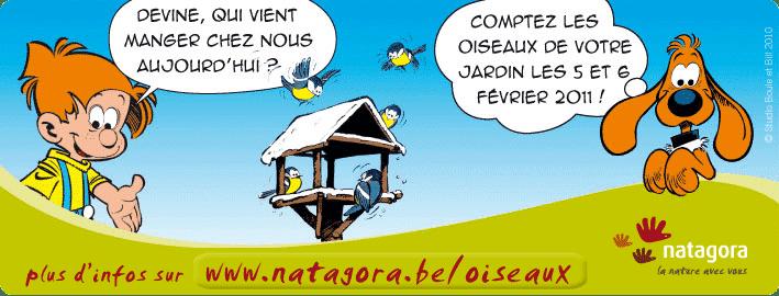recensement-oiseaux