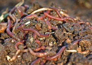 animaux-compost