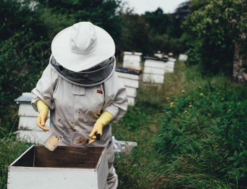Rencontre avec un apiculteur de la région d'Ath