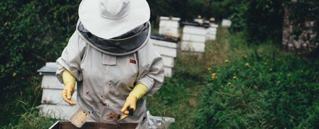 apiculteur-ath