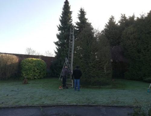 Mon stage dans l'entreprise forestière Florins