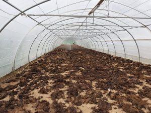 compost-serre