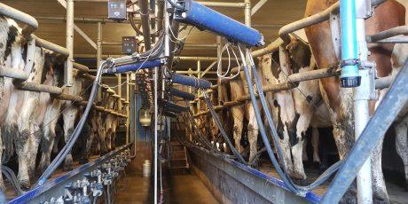 traite-vaches