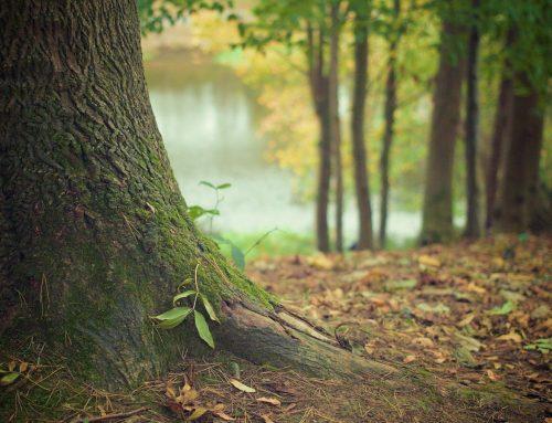 L'importance du patrimoine au sein de  l'environnement