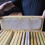 recolte-miel