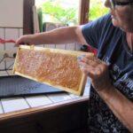 recolte-miel-2
