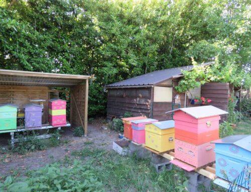 L'apiculture, l'histoire d'une passionnée